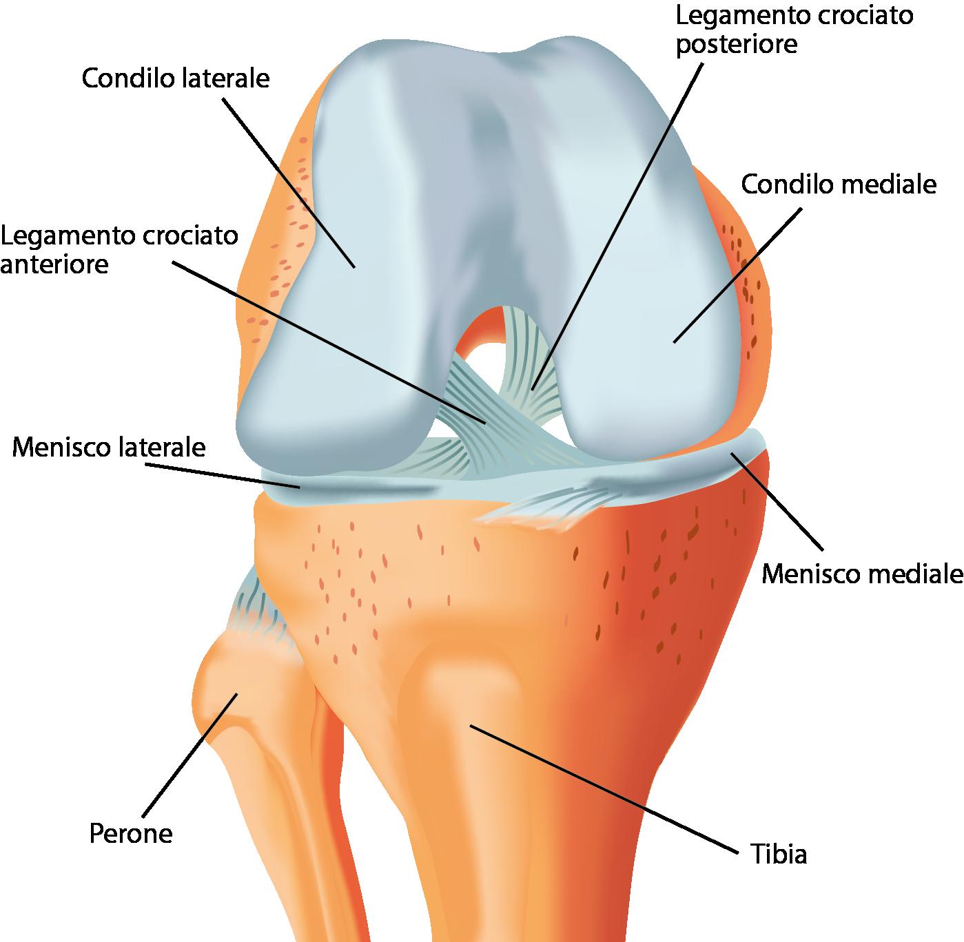 La riabilitazione del ginocchio infortunato - Ortopedici e