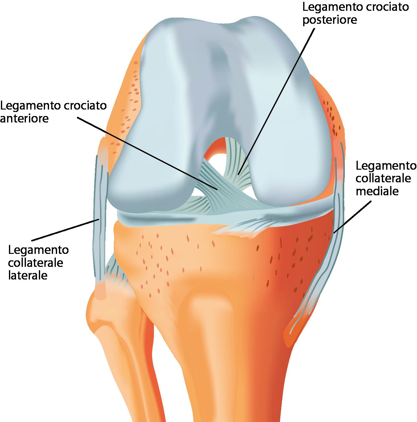 Osteoartrite (OA)